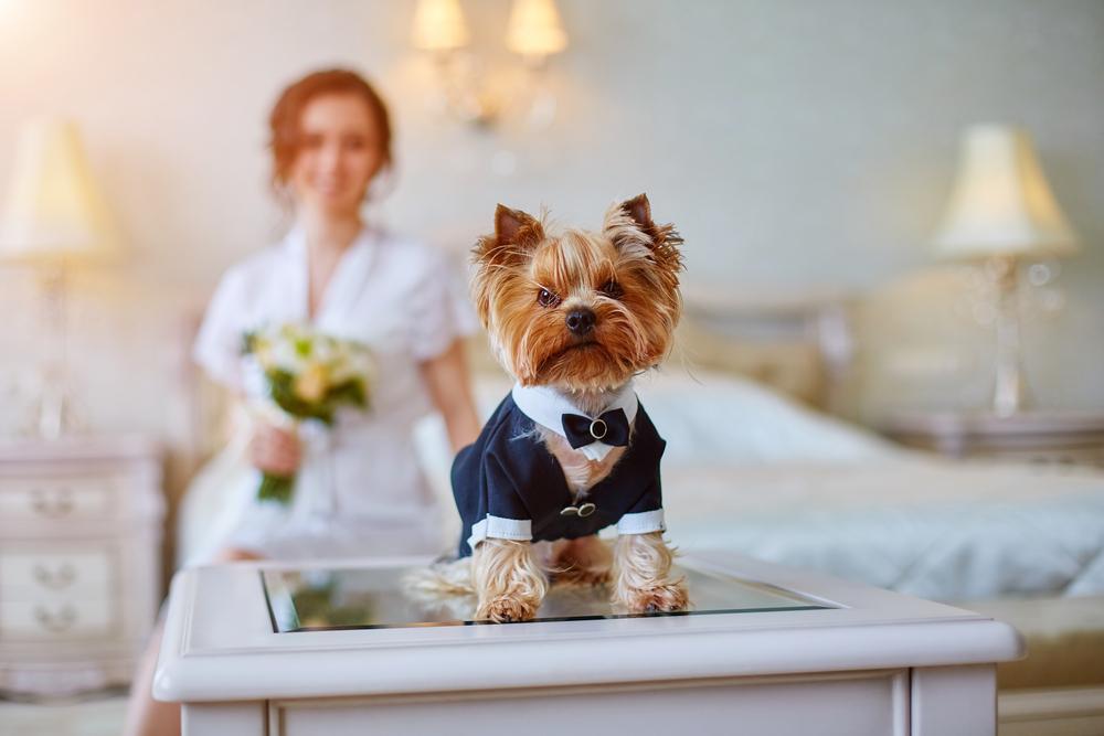 mascota boda